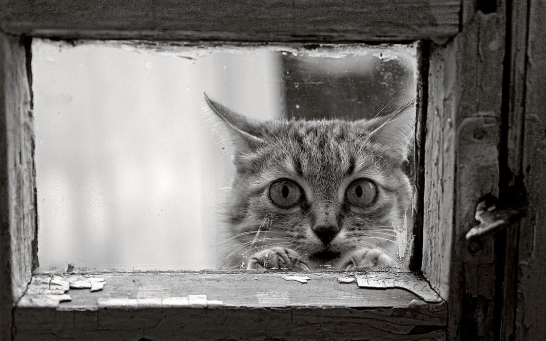 Cats monochrome window panes wallpaper