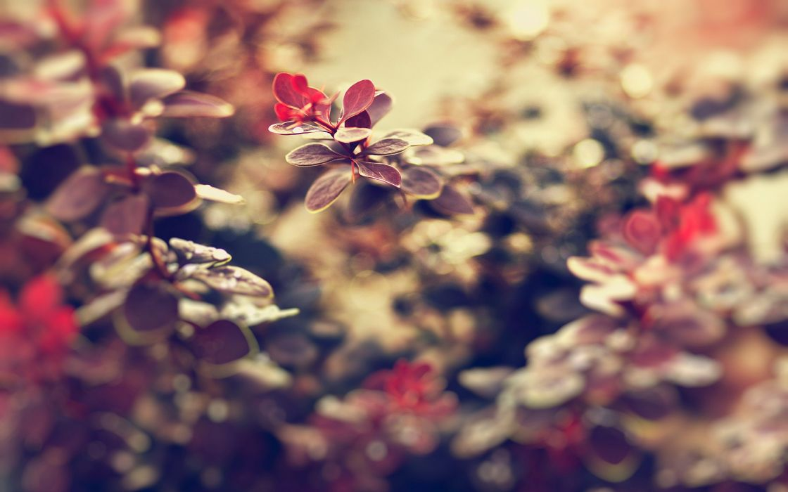 Landscapes nature leaves macro depth of field wallpaper