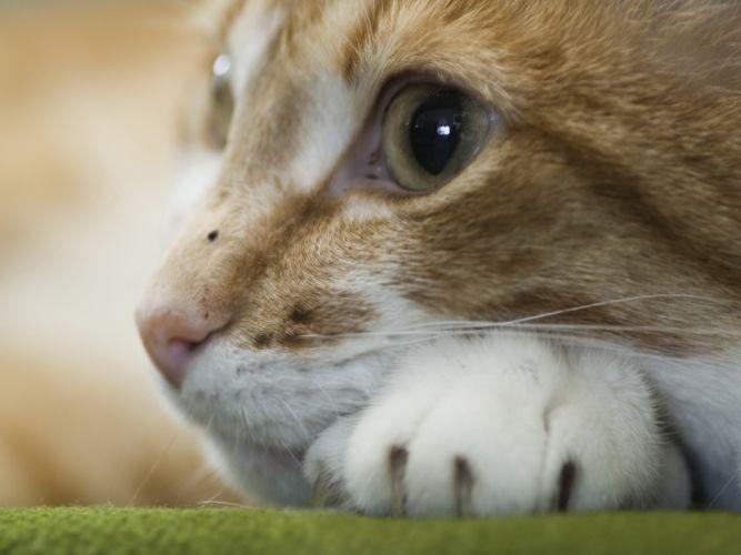 Closeup cats wallpaper