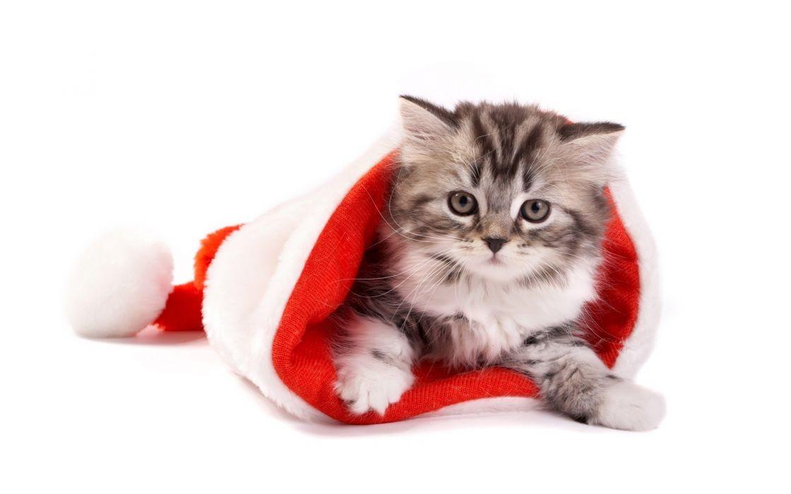 Cats animals christmas kittens wallpaper