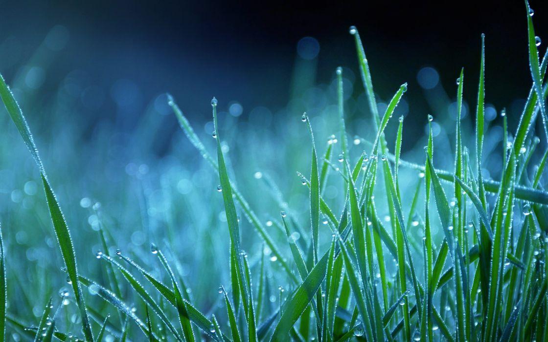 Night grass bokeh dew wallpaper