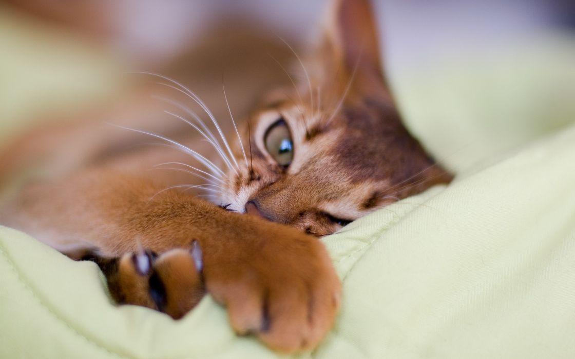 Eyes cats animals depth of field wallpaper