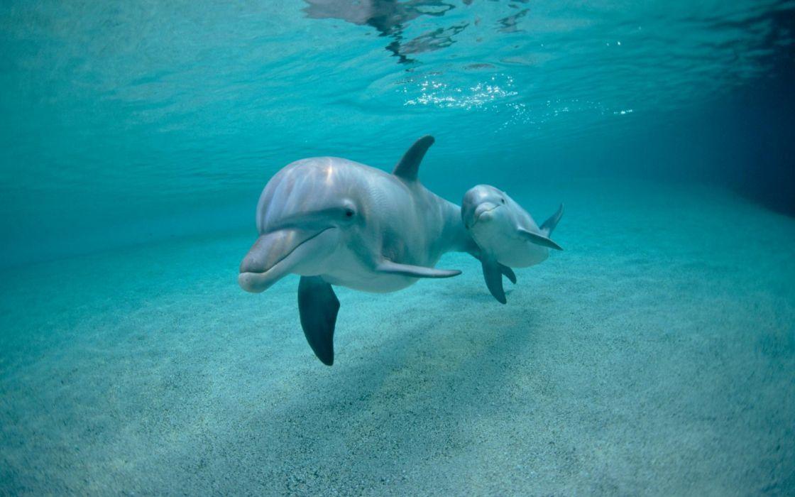 Fish dolphins mammals underwater wallpaper