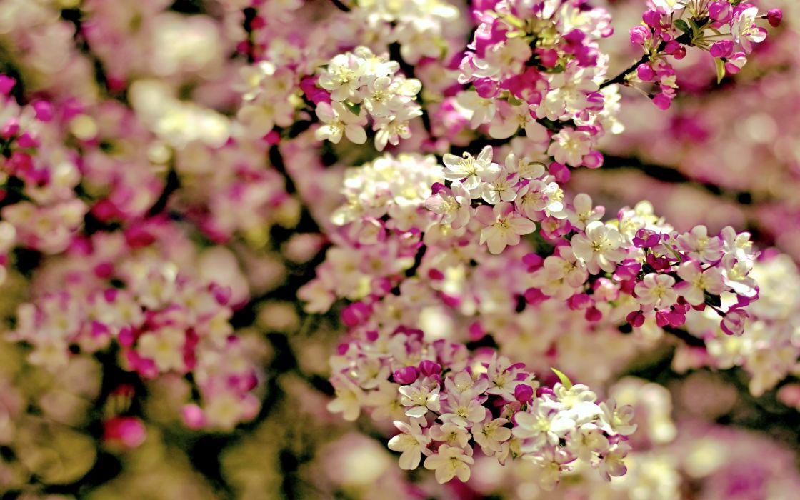 Trees flowers depth of field wallpaper