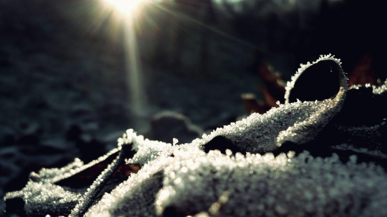 Nature winter macro wallpaper