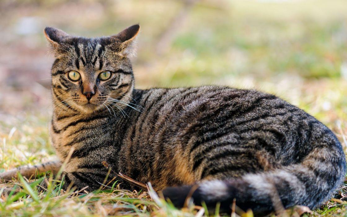 Cats animals grass green eyes wallpaper