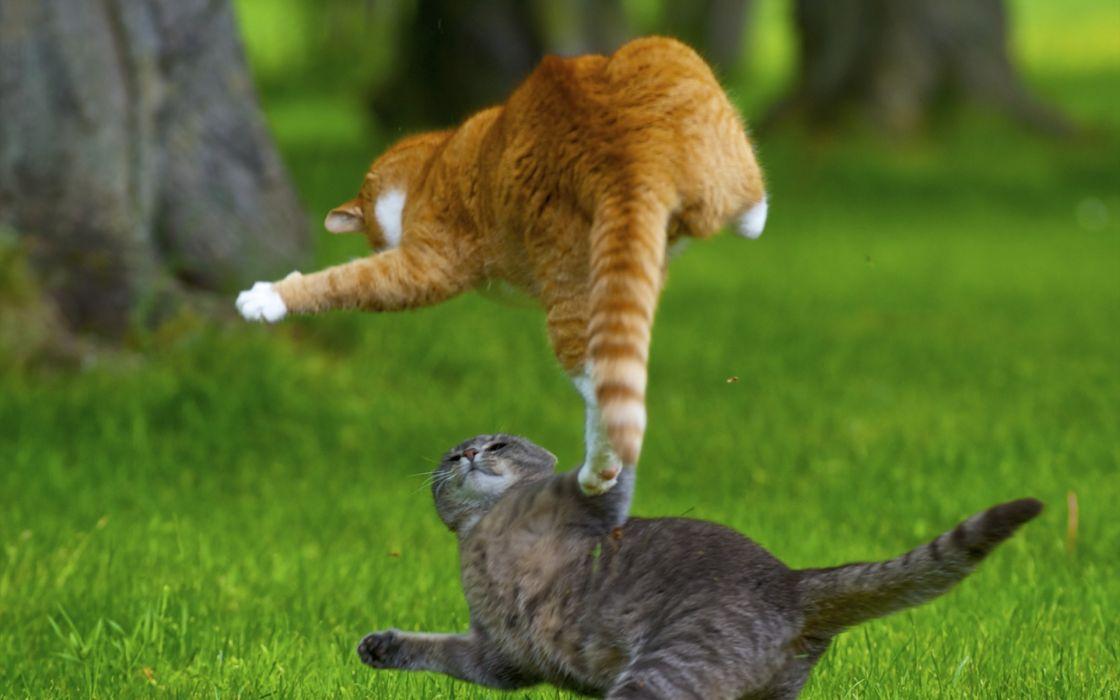 Cats animals kung fu playing wallpaper