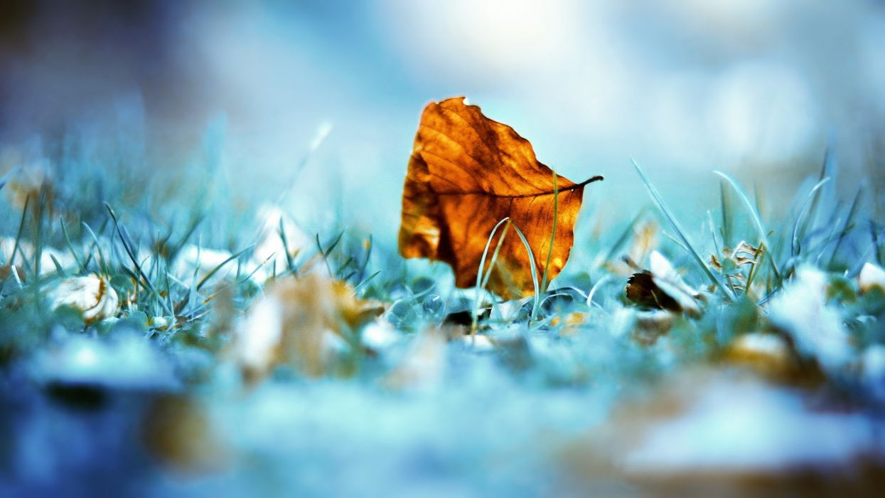 Nature leaves grass outdoors macro wallpaper