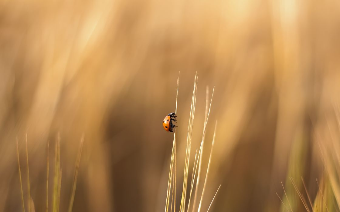 Nature insects summer ladybirds wallpaper