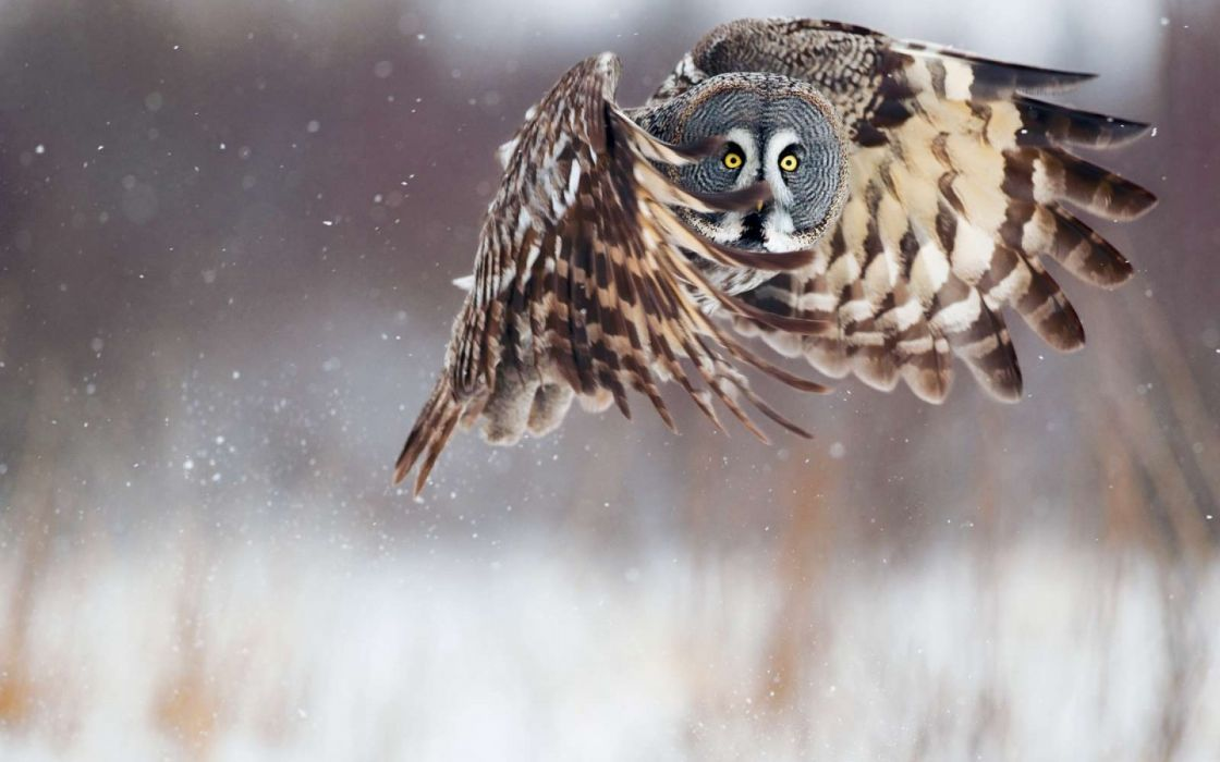 Wallbirds owls wallpaper