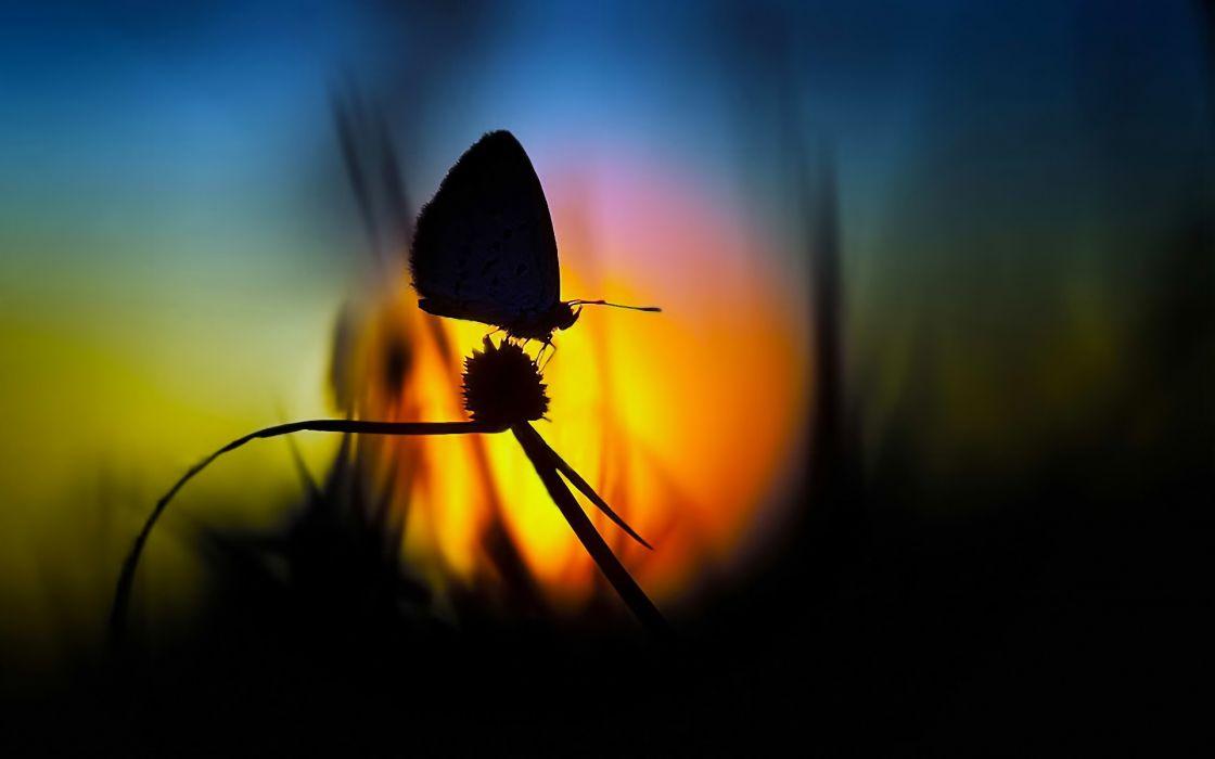 Nature sun dawn flowers butterfly silhouette fields wallpaper