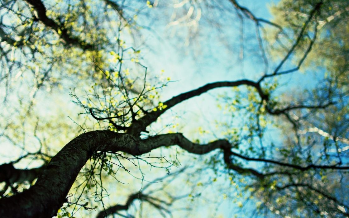 Nature trees macro depth of field skyscapes blurred branches wallpaper