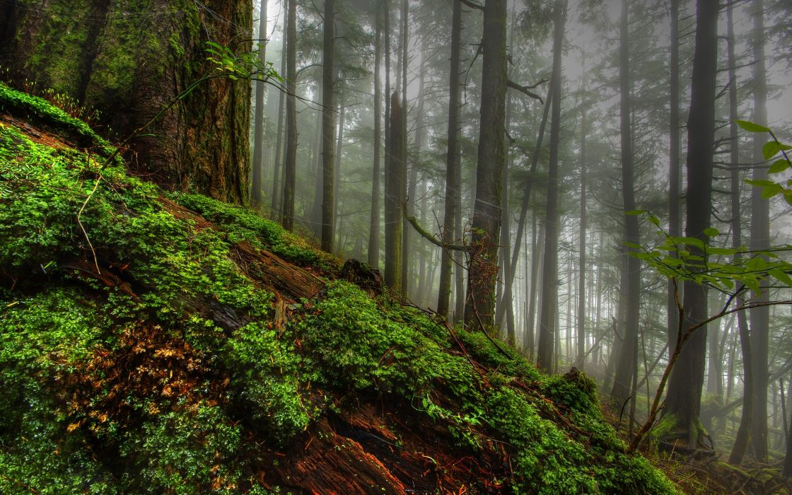 Nature trees forest planets fog plants moss hdr photography logs wallpaper
