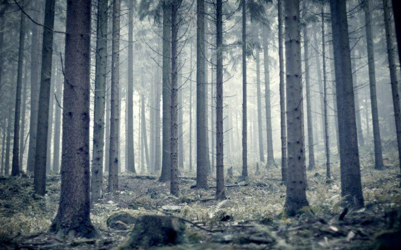 Landscapes snow forest wallpaper