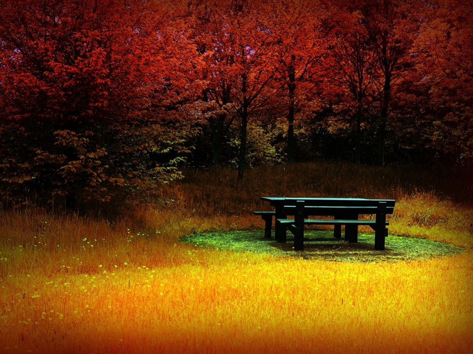 Trees autumn bench wallpaper