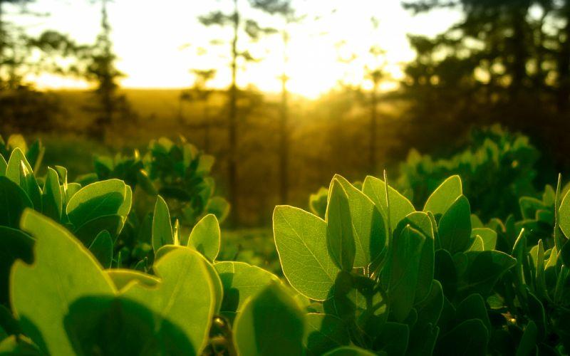 Green nature leaves plants sunlight wallpaper