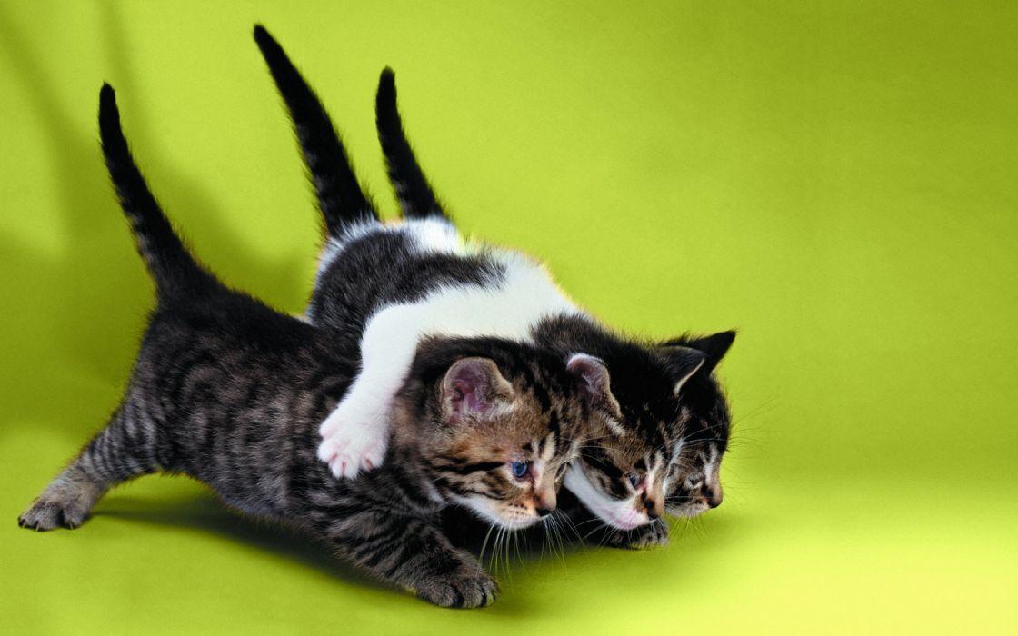 Cats animals feline kittens green background wallpaper