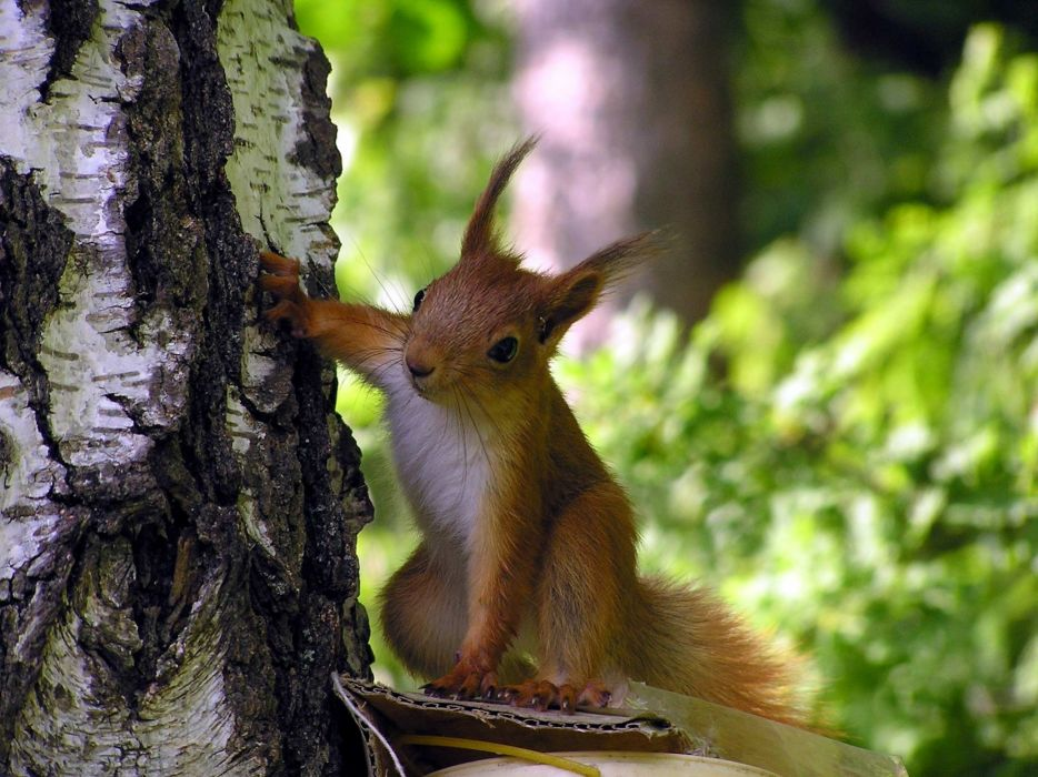 Trees animals squirrels wallpaper