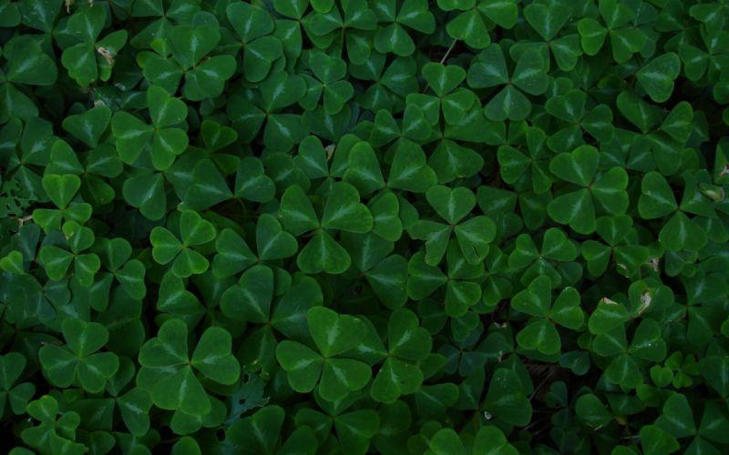 Green leaf clover wallpaper