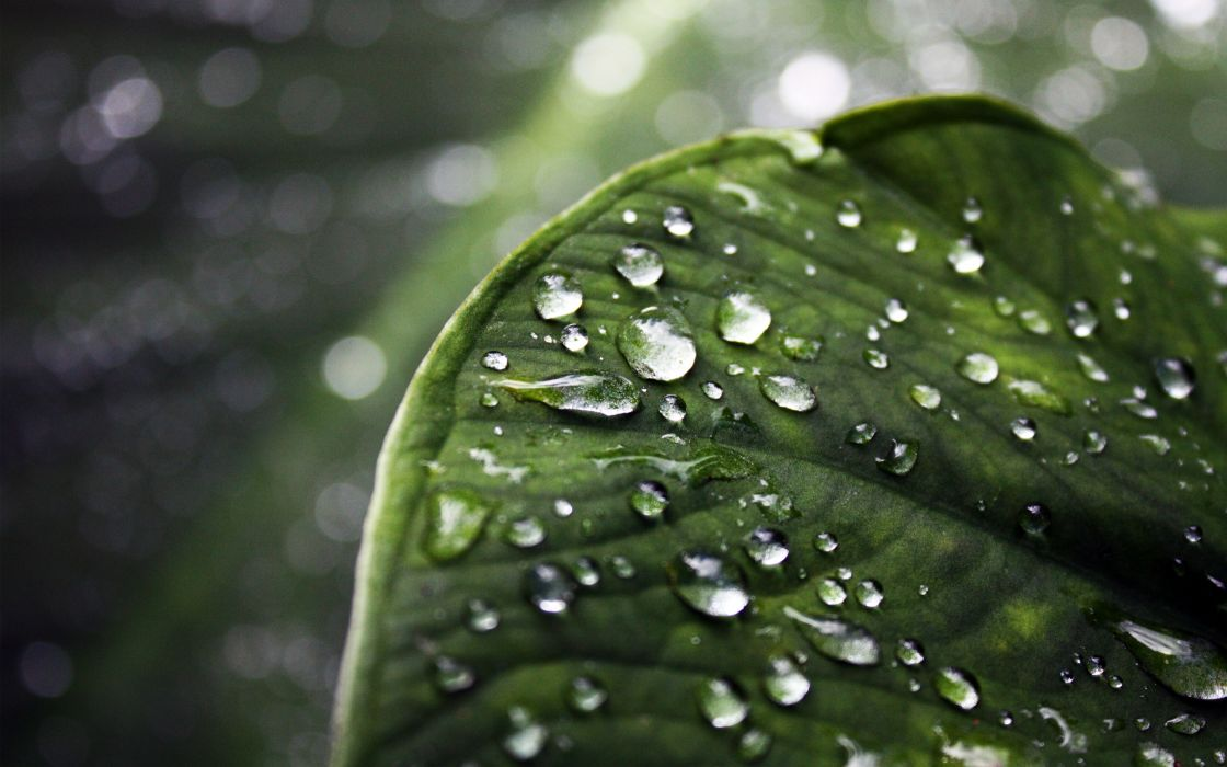 Green leaf water drops depth of field wallpaper
