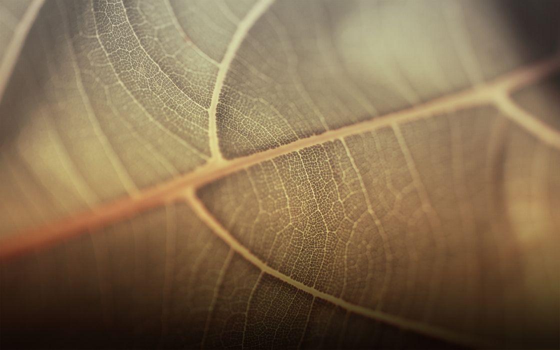 Leaves macro wallpaper