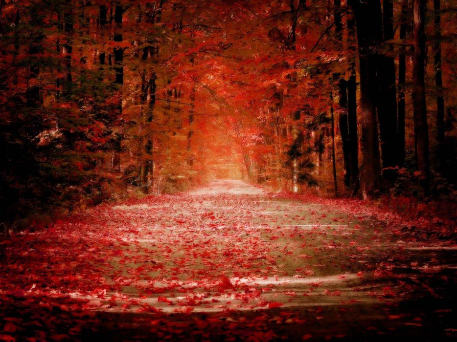 Nature trees autumn red roads wallpaper