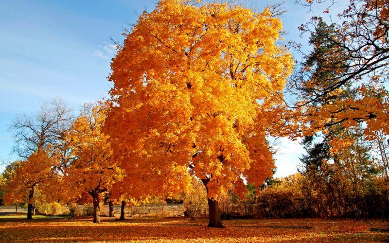 Nature autumn yellow wallpaper