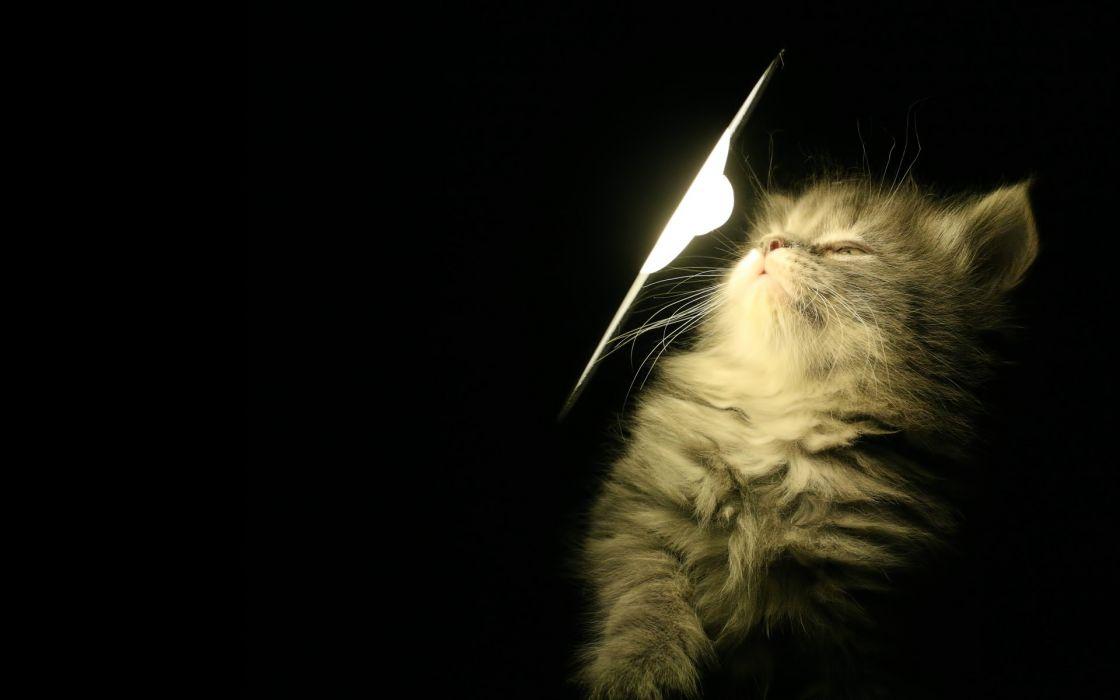 Light cats black background wallpaper
