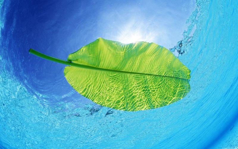Water nature leaves plants underwater wallpaper