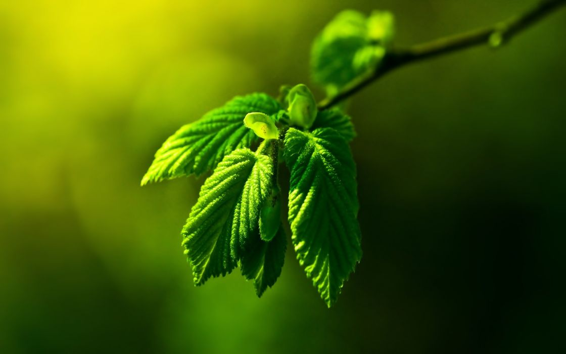 Green nature leaves macro depth of field wallpaper