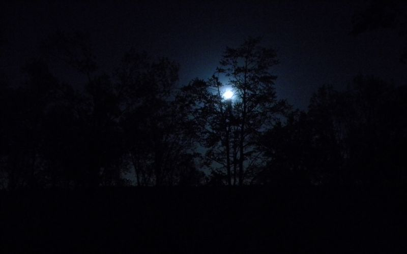 Nature trees dark night forest moon wallpaper