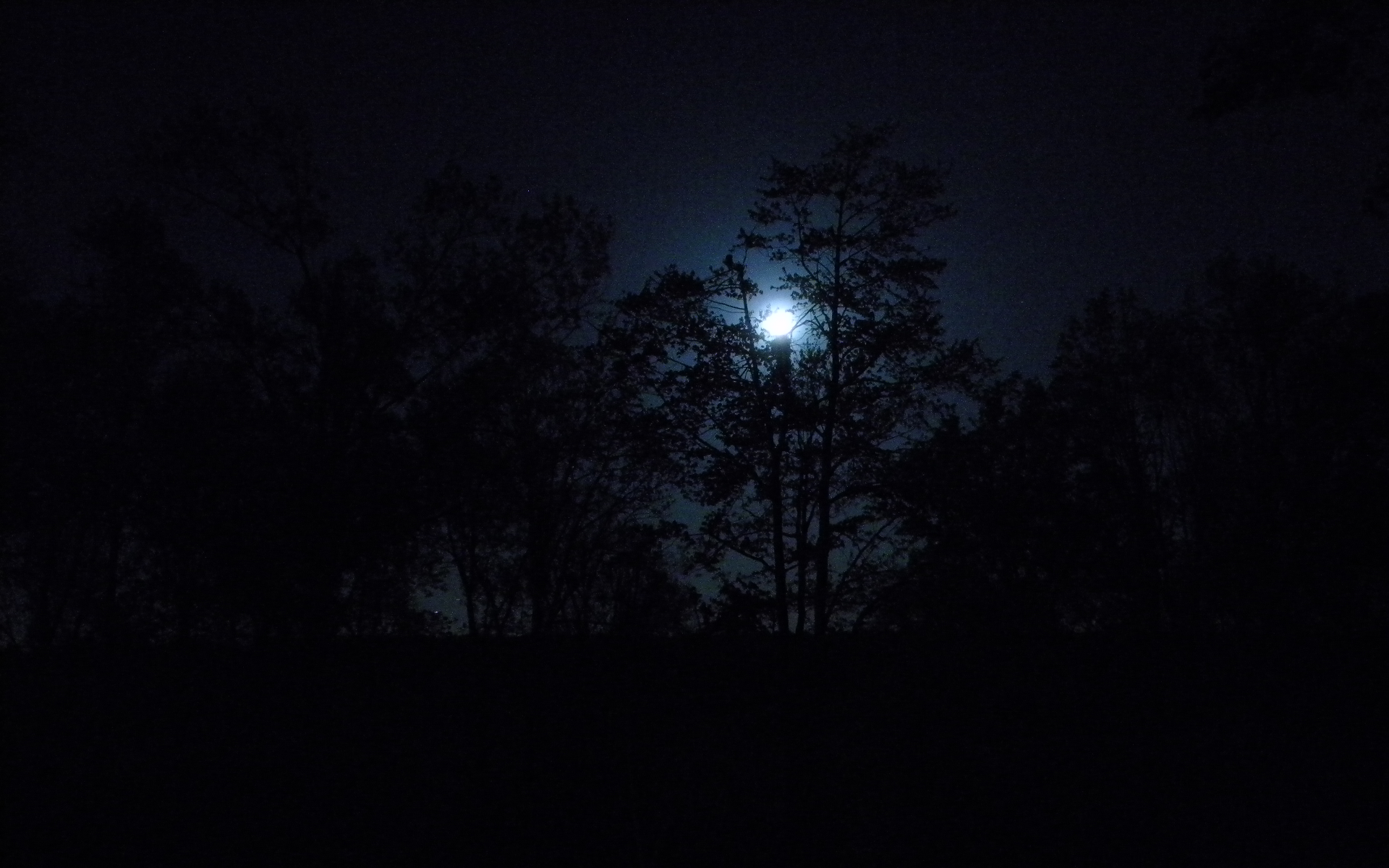 Nature trees dark night forest moon wallpaper backgroundForest At Night With Moon