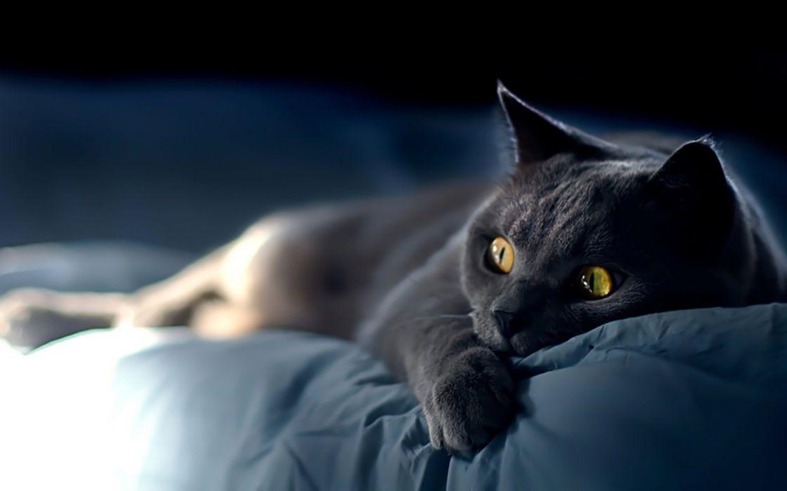 Black cats animals wallpaper