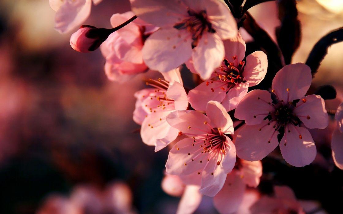 Flowers pink depth of field wallpaper