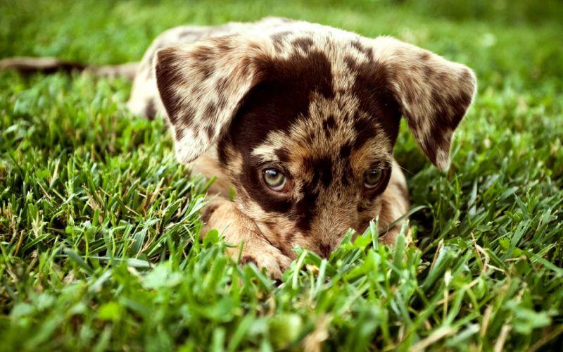 Nature animals grass dogs outdoors puppies wallpaper