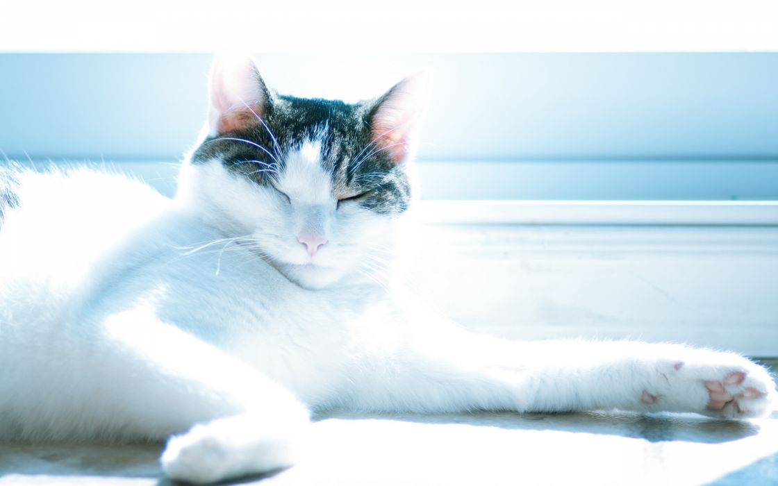 Cats animals relaxing lying down closed eyes wallpaper
