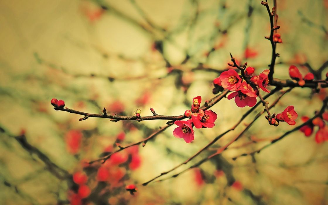 Trees flowers wallpaper