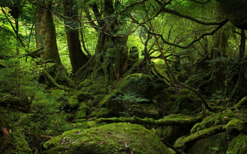 Green nature trees outdoors plants wallpaper