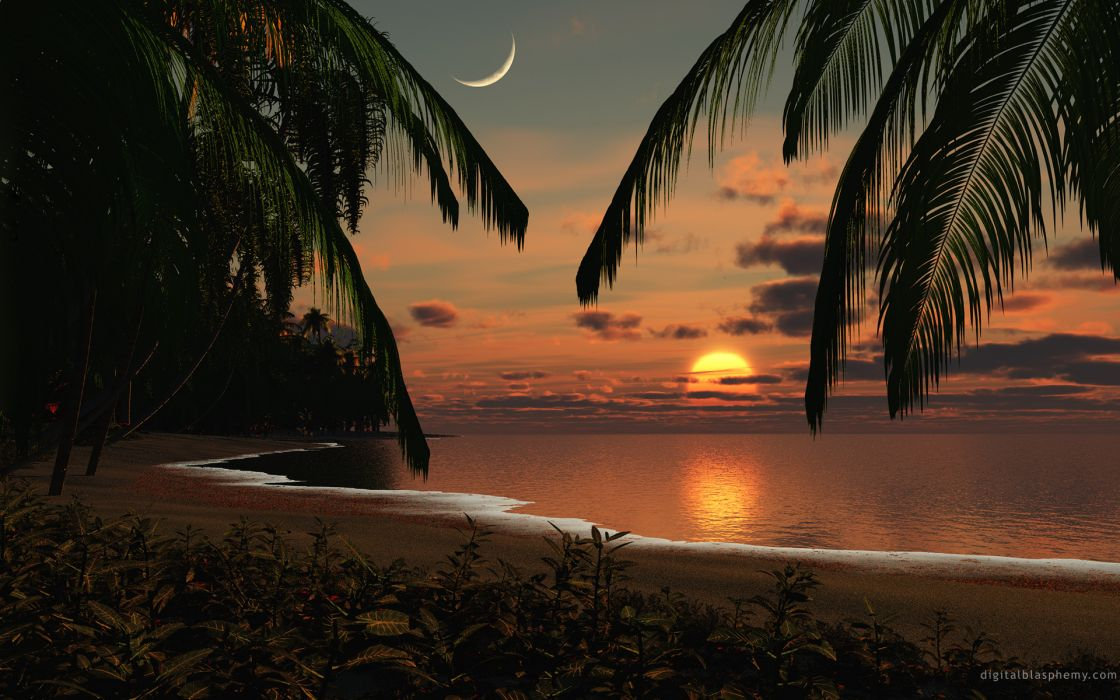 Sun beach palm trees wallpaper