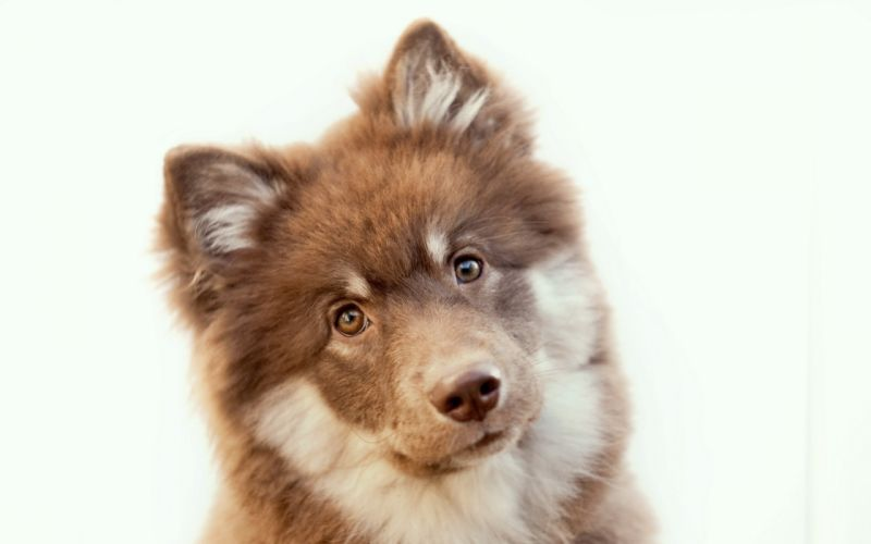 Eyes animals dogs brown puppies ears wallpaper
