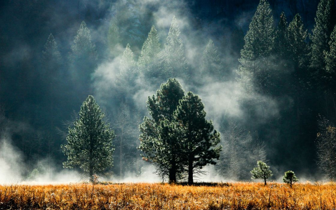 Trees forest fields fog wallpaper