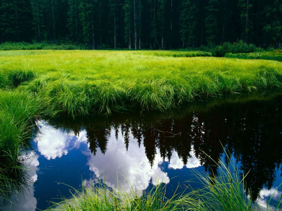 Green water clouds landscapes nature forest grass meadow wallpaper