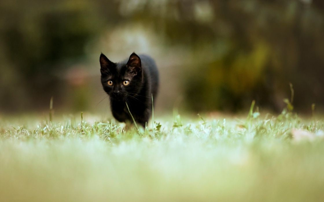 Cats hdr photography wallpaper
