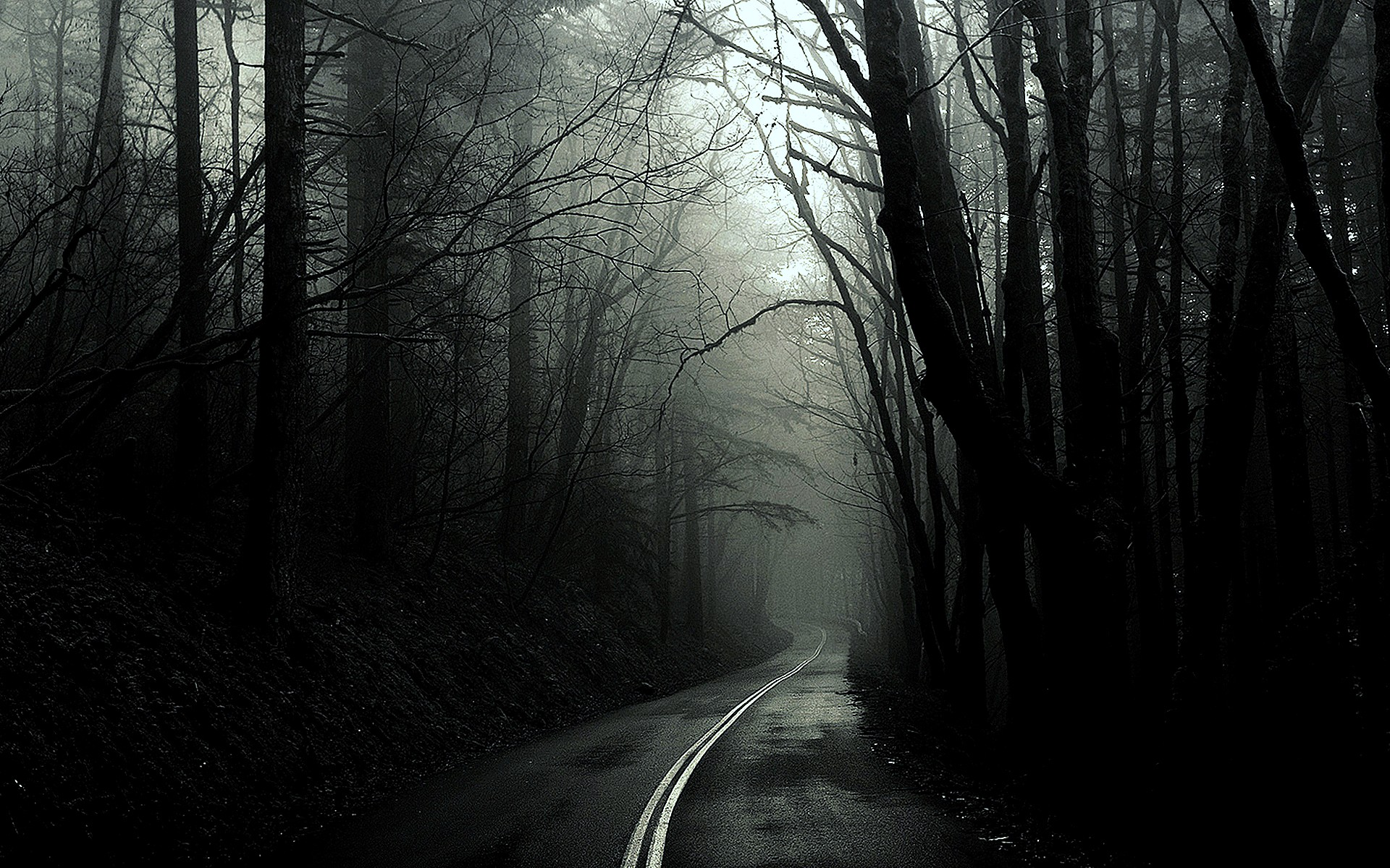 Black And White Trees Dark Forest Roads Monochrome Wallpaper