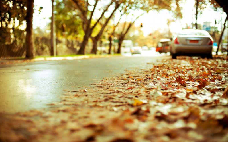 Cars leaves roads depth of field fallen leaves wallpaper