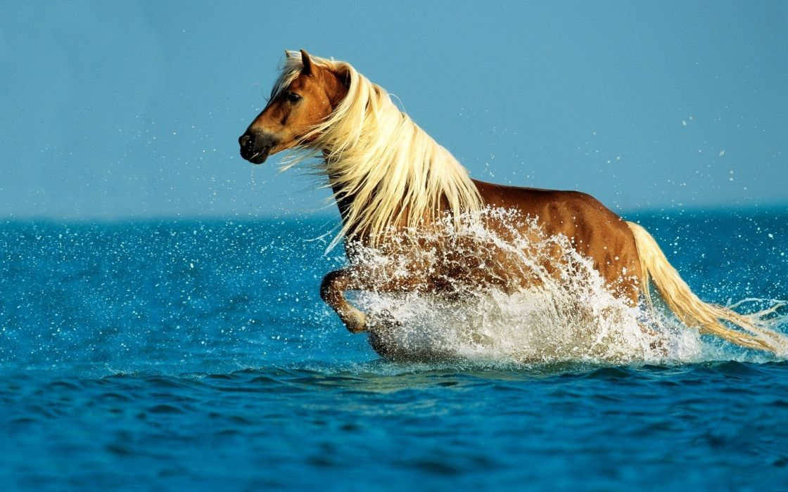Water animals horses wallpaper