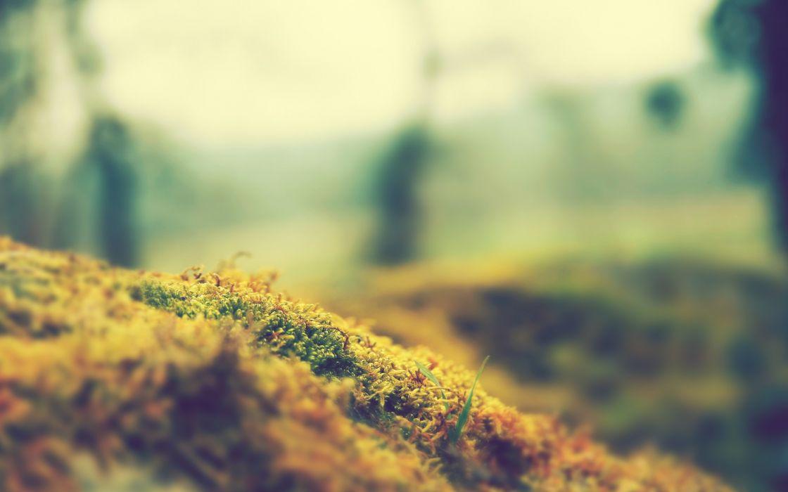 Nature focus moss macro blurred wallpaper