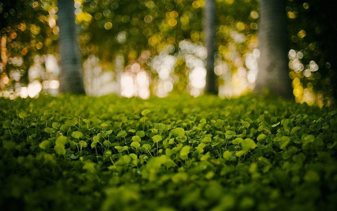 Green nature grass bokeh blurred background wallpaper