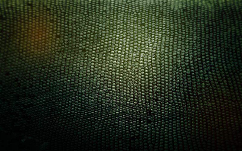 Snakes textures skin wallpaper