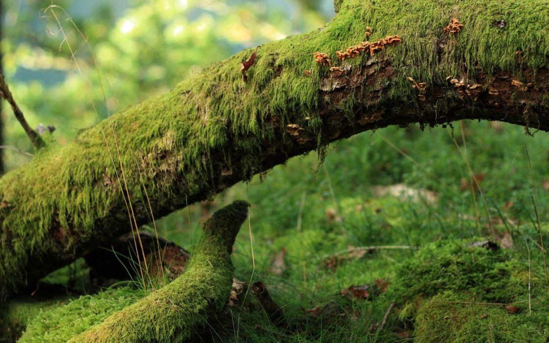 Green landscapes nature wood wallpaper